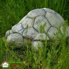 Черепаха S007