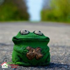 Лягушка P027