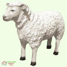 Овца  5-127