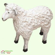 Овца (М)  5-128