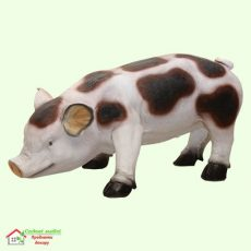 Свинка пятнистая  5-256
