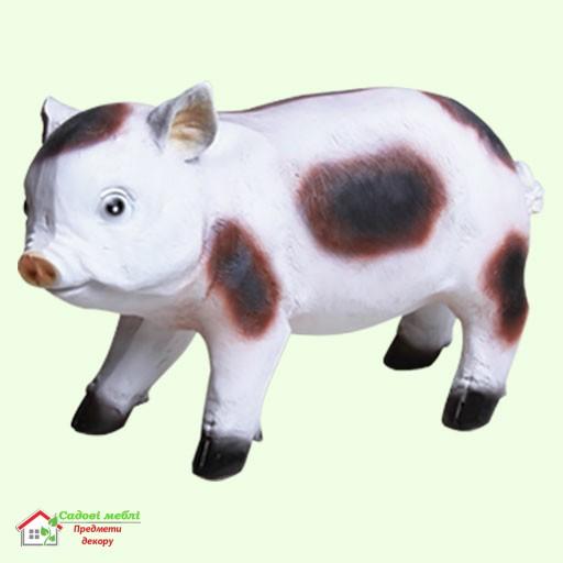 Свинка вьетнамская  5-250