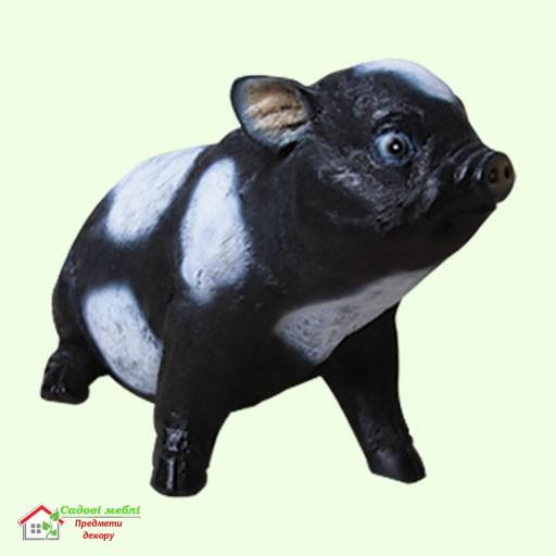 Свинка вьетнамская (сид)  5-249