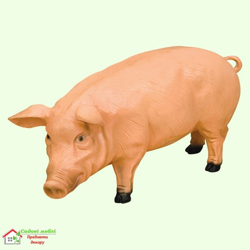 Свинья (Б)  5-252
